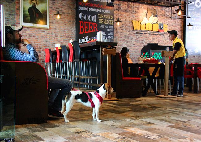 Restaurante Wild Dog Petfriendly en Puebla